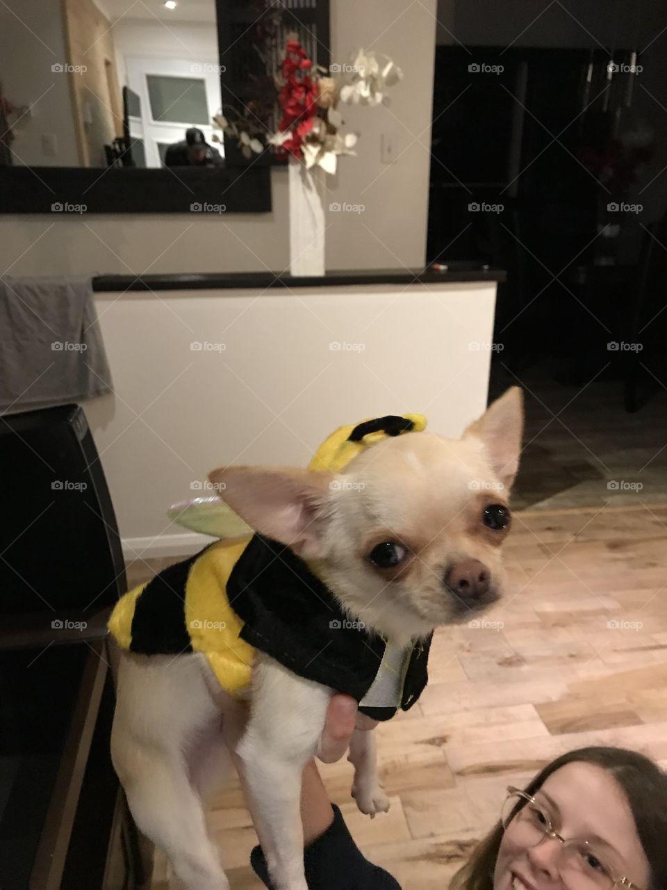 #dog #bee #