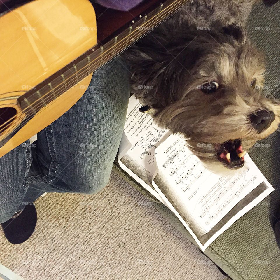 Schnoodle Sings the Blues