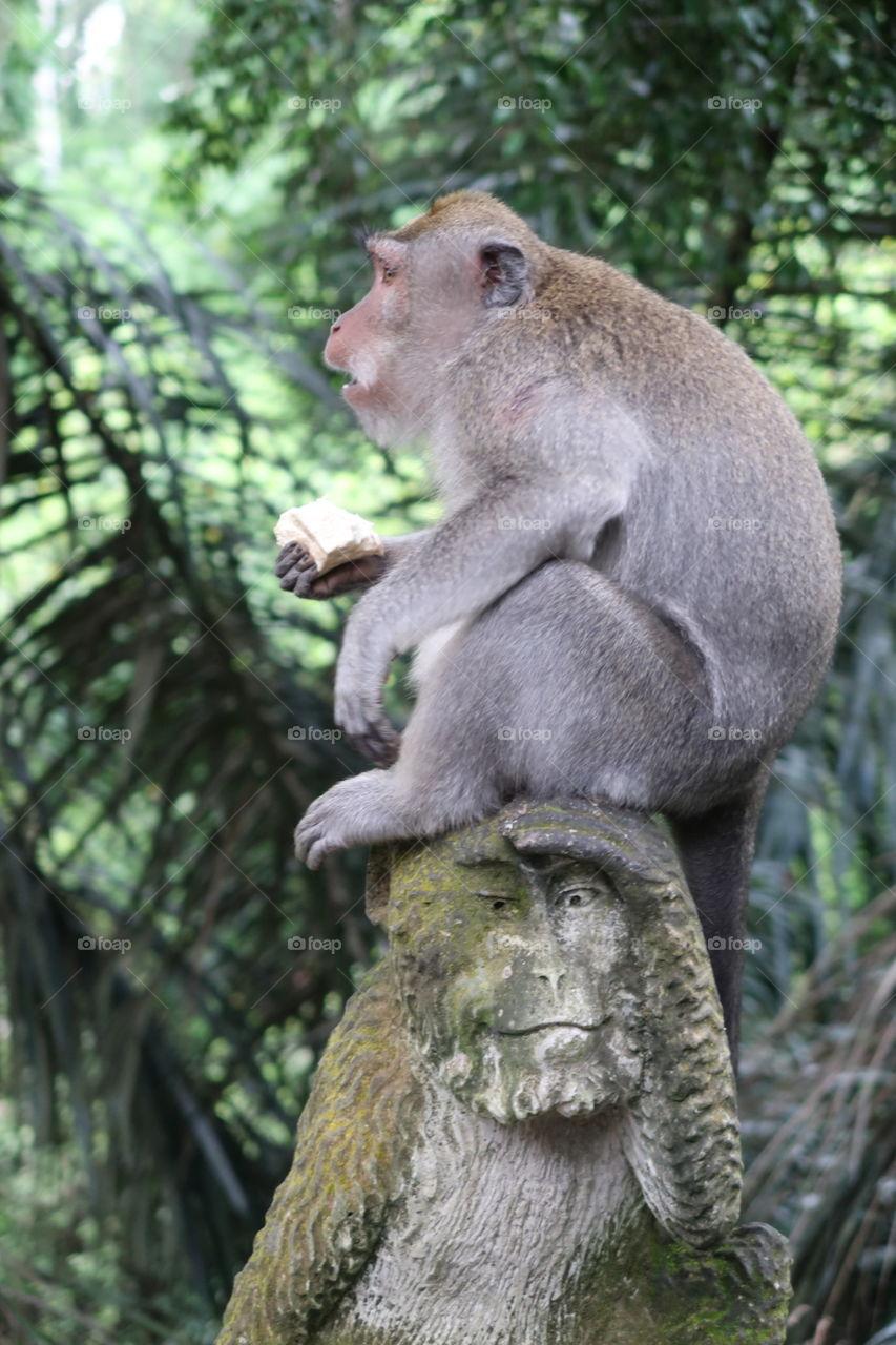 Monkey on monkey