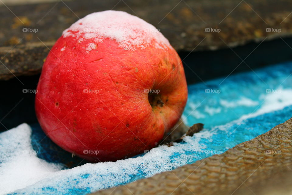 Macro red apple on blue plastic with snow