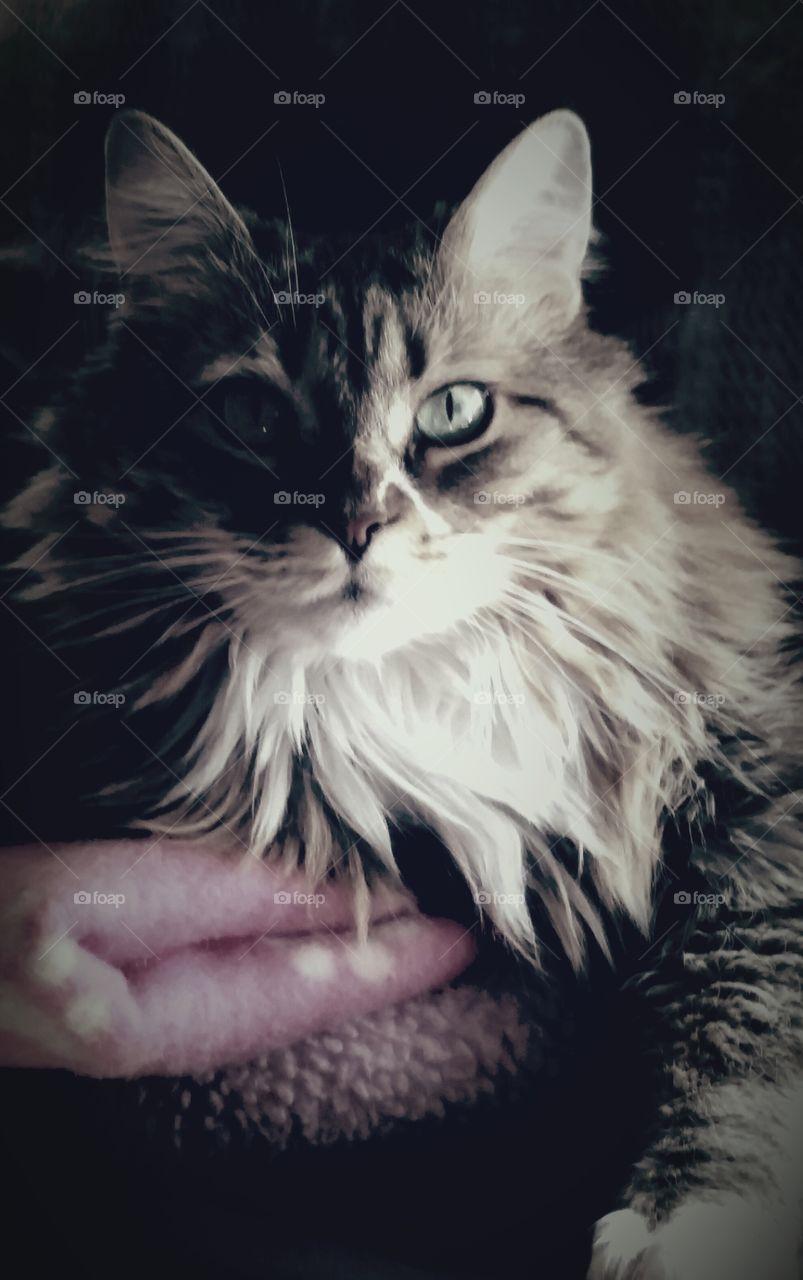 Scarlet. my beautiful girl