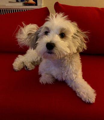 My Dog Sydney