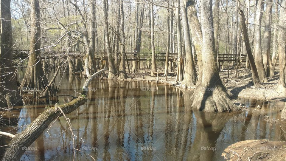 Nature, Water, Wood, Tree, River