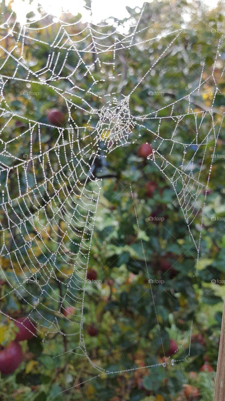 Frost & cobwebs