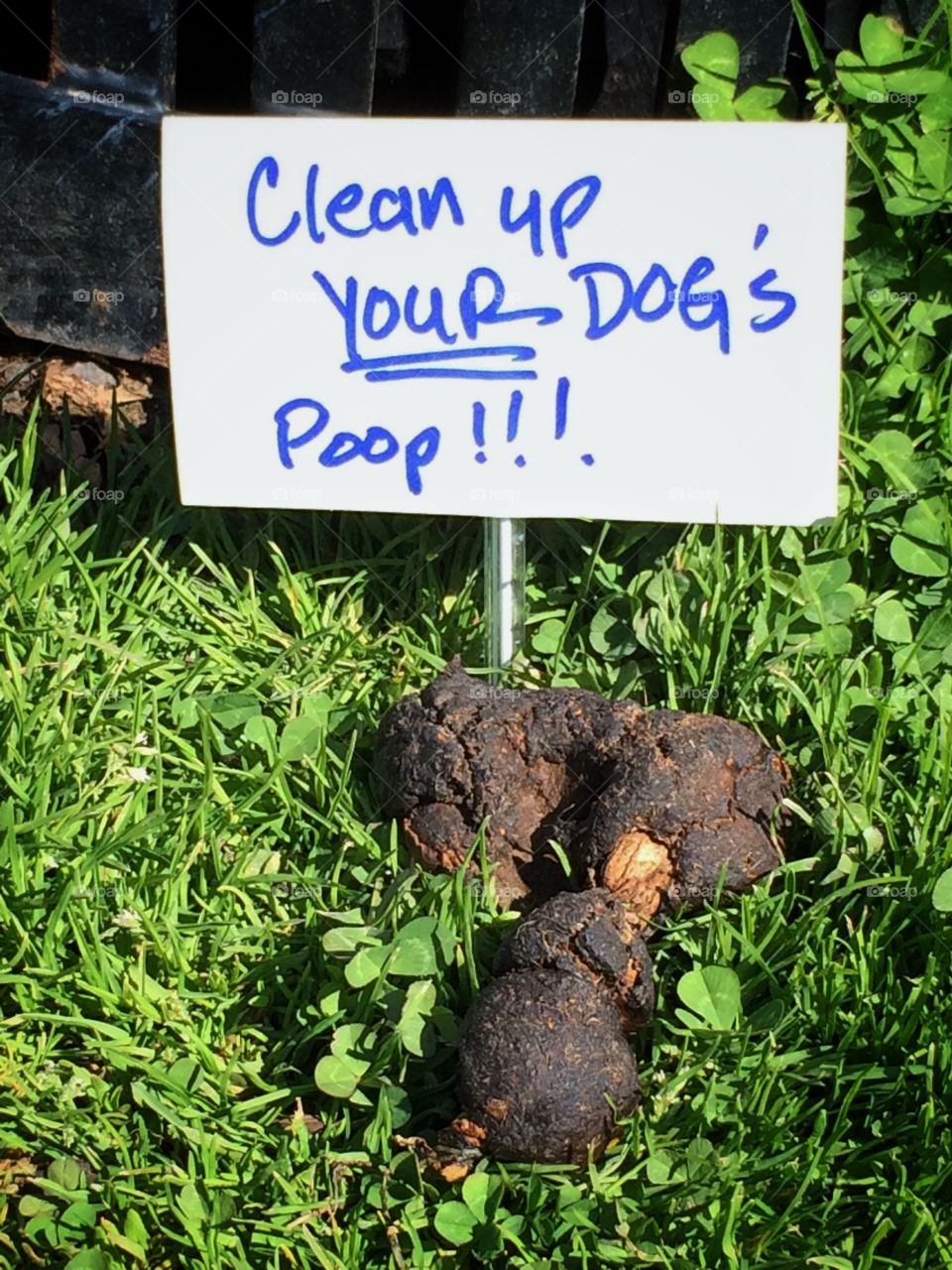 Dog poop with sign