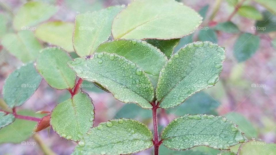 Refreshing dew drops on leaves