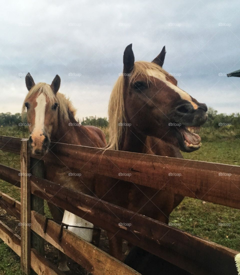At the farm with the horses.
