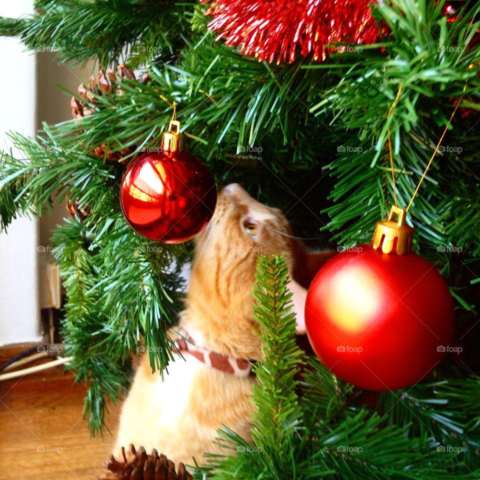 Christmas cat. Christmas cat