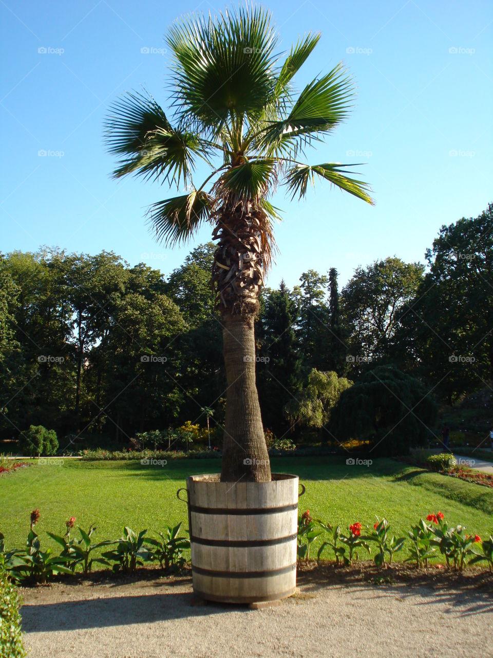 A Palm in a Botanic Garden