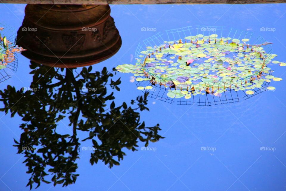 plant in the pot reflected in the water with water lilies