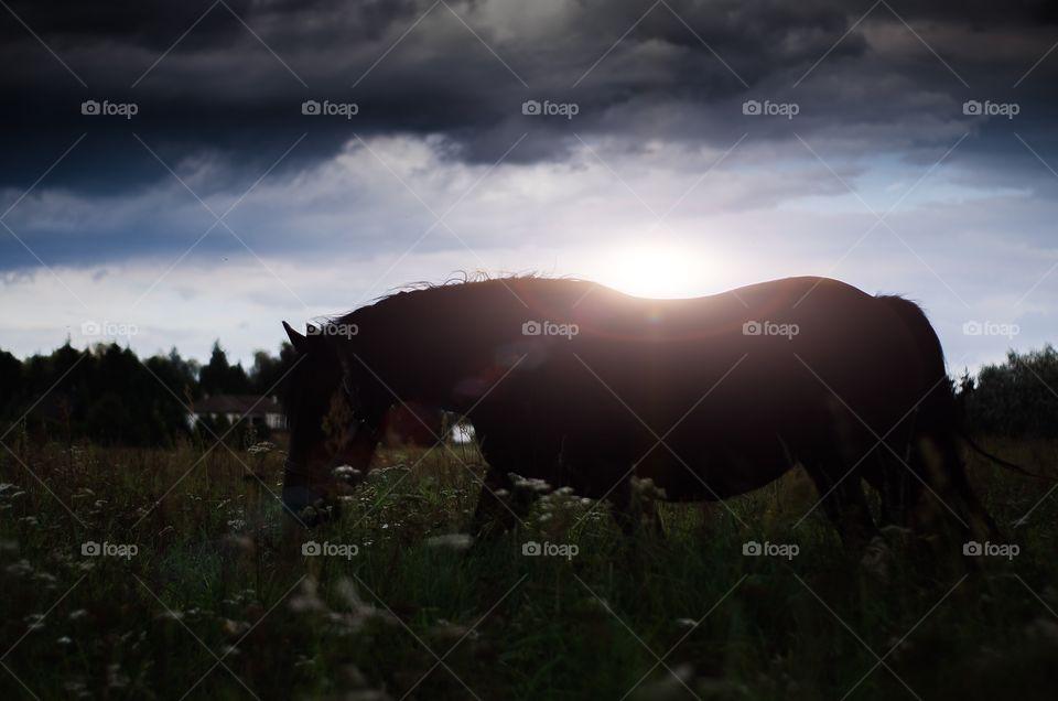 Horse by Sundown