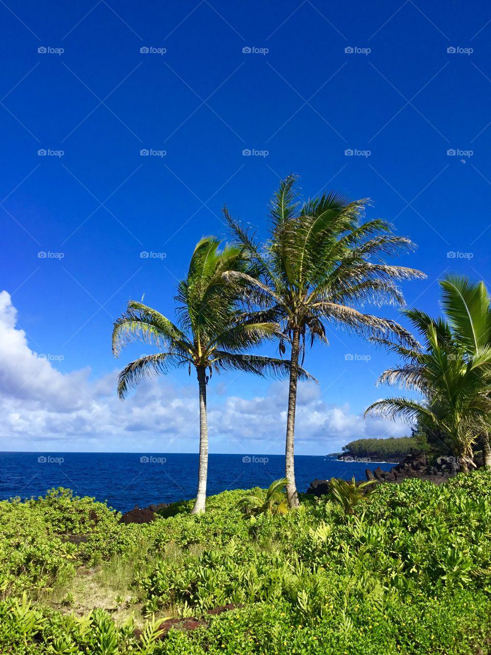 Blue sky day on the Big Island