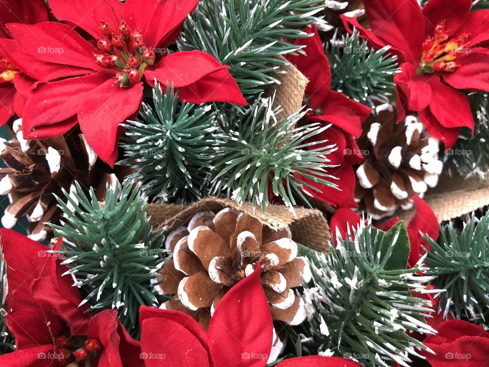 I love photos especially Christmas ones, where the photo has some deep red colors in, therefore it must be poinsettia time.