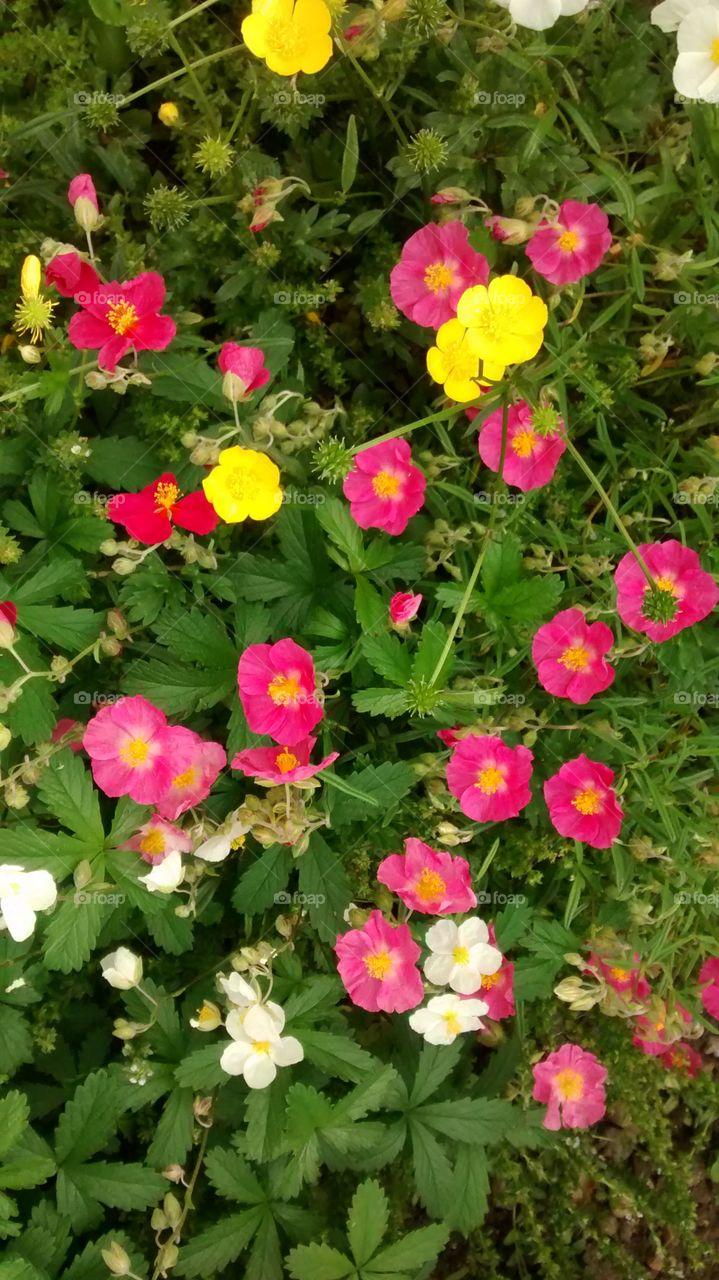 Garden Flowers. Colourful green flowers