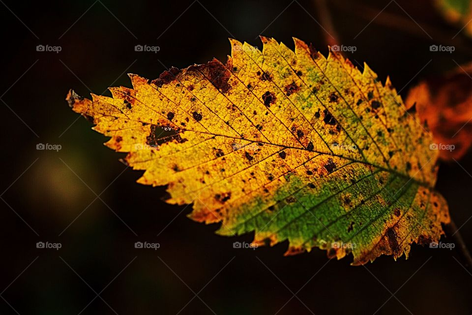 First Signs Of Autumn, Colorful Leaf, Leaves In The Woods, Details Of A Leaf, Closeup Of A Tree Leaf, Pretty Fall Leaves