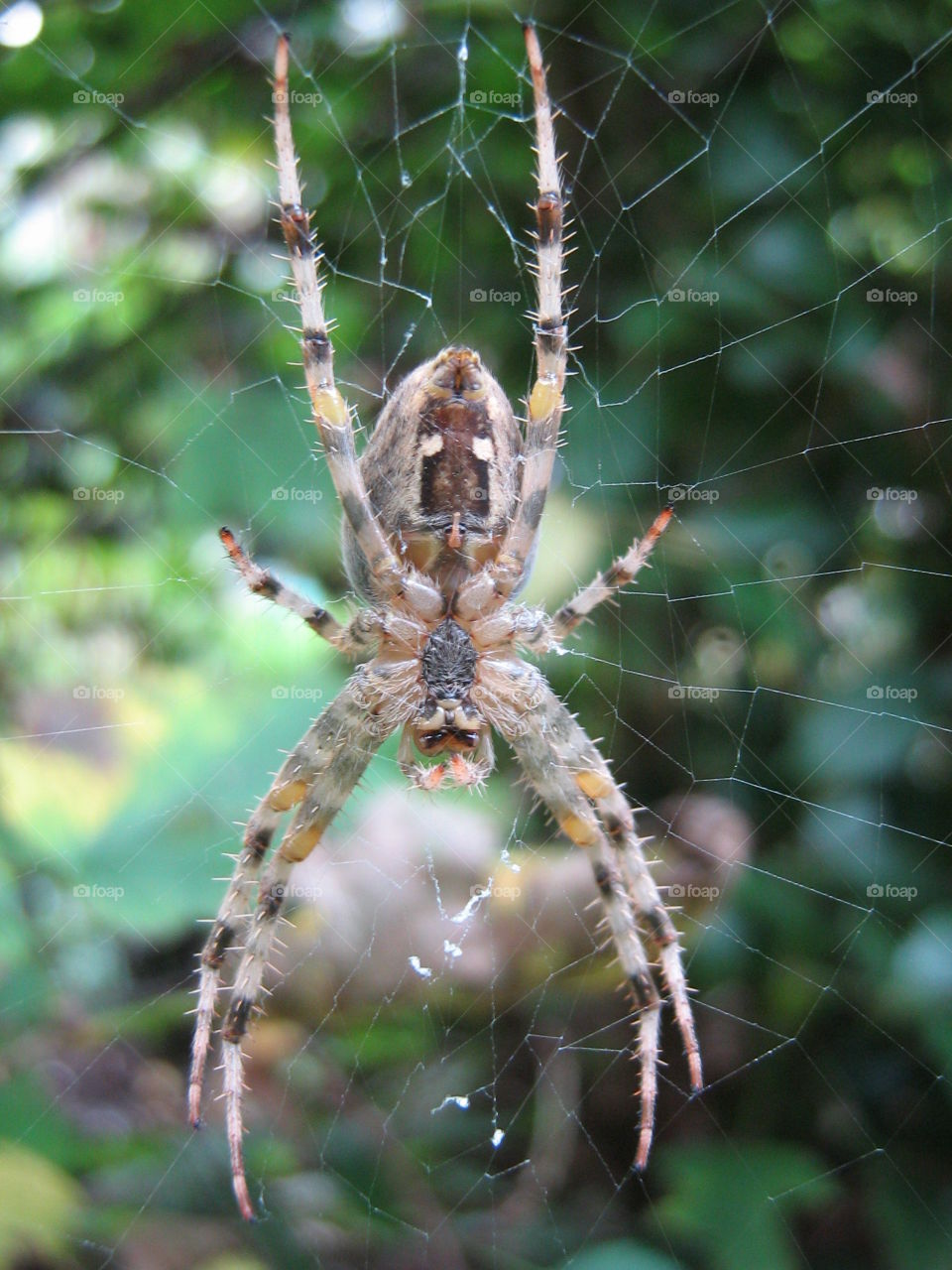 Extreme close-up of spider on spiderweb