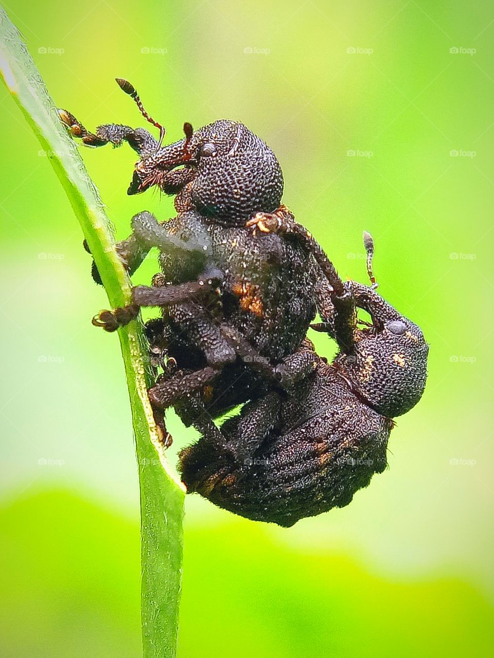 Mating moment of insects..