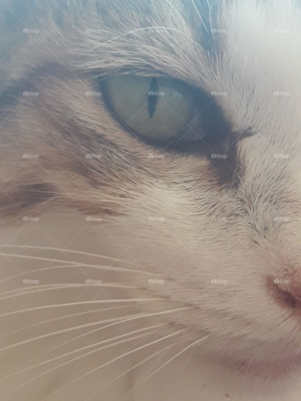 very close to the cat's face