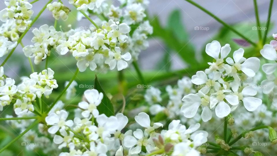 White summer flower