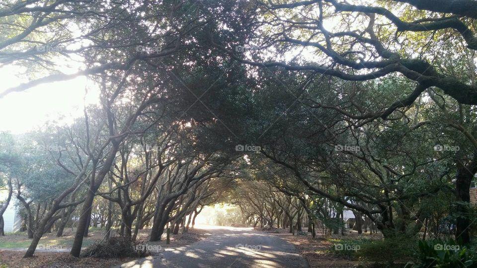 North Carolina tree canopy over road
