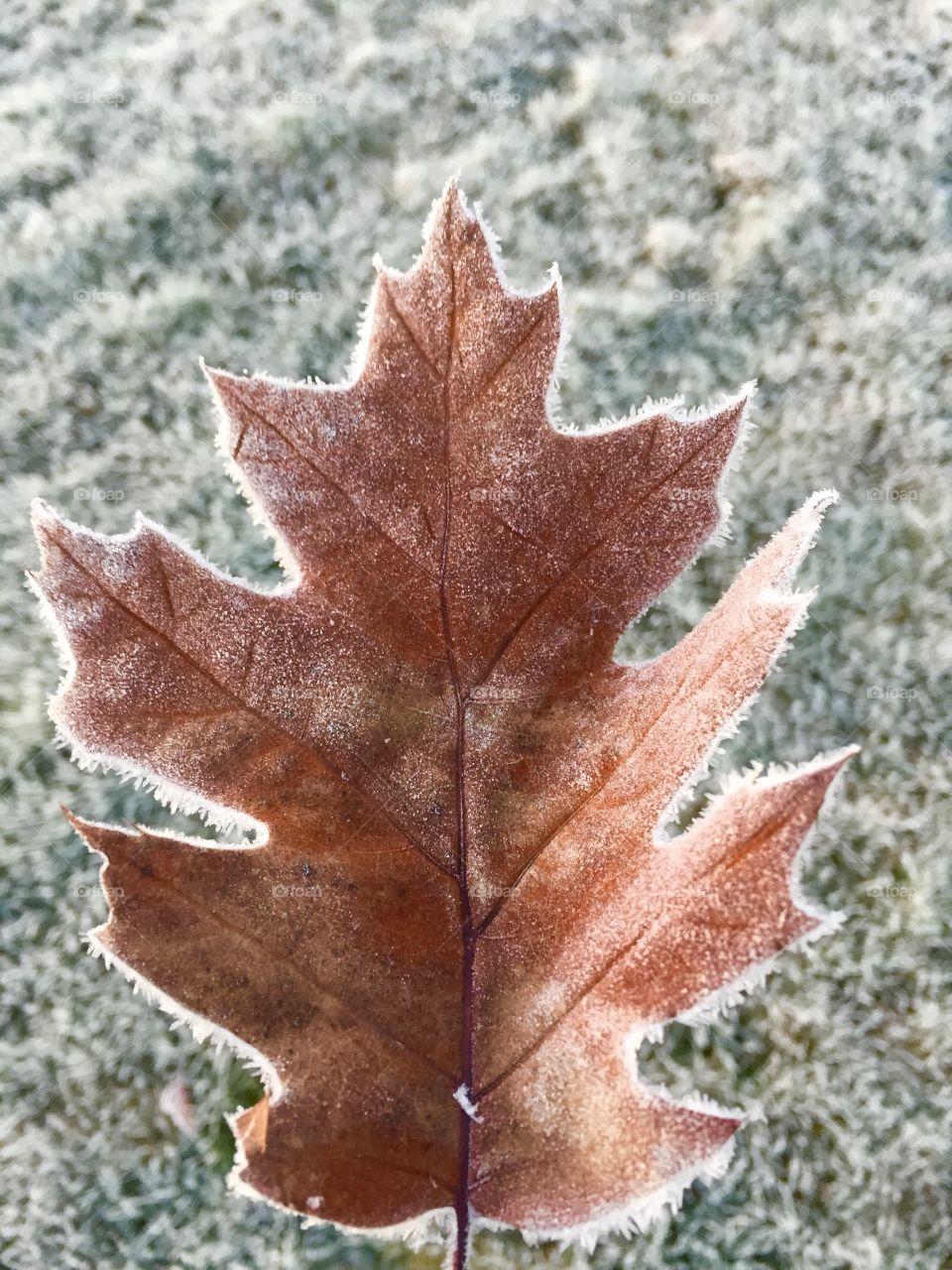 The first frost in Oregon