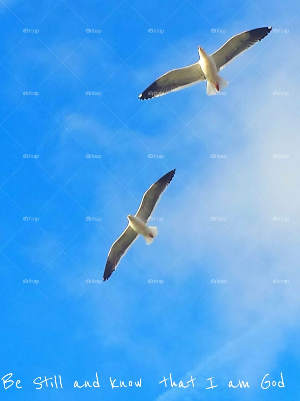 """""""Seagulls In Flight """". Be Still And know That I Am God"""