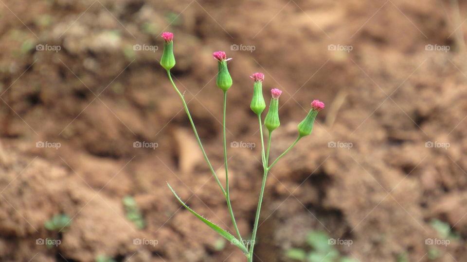 very little flowers