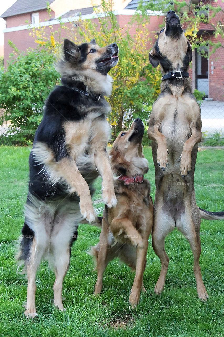 dog dogs cute hund by dryair