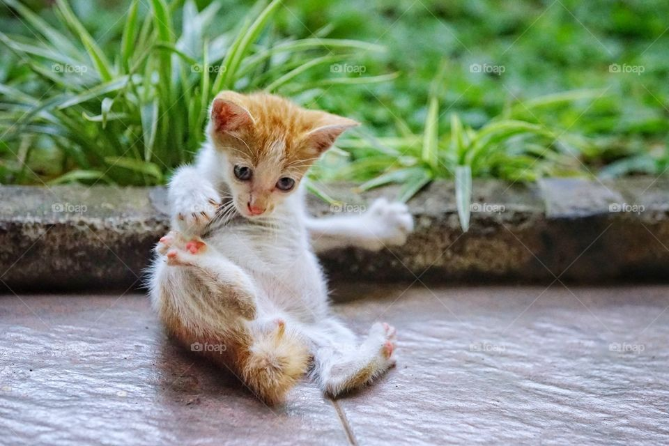 kitten playing alone