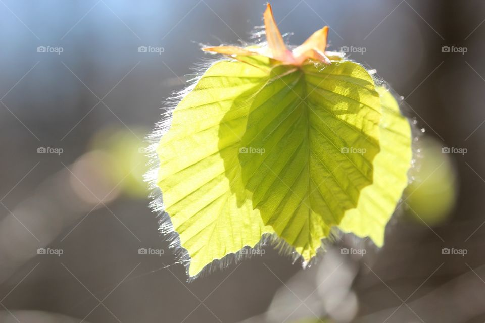 Extreme close-up of a leaf