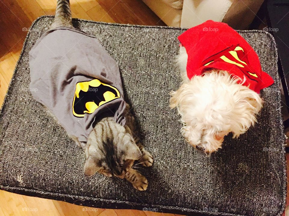 Superdog and batcat fight crime together in the neighborhood ;)