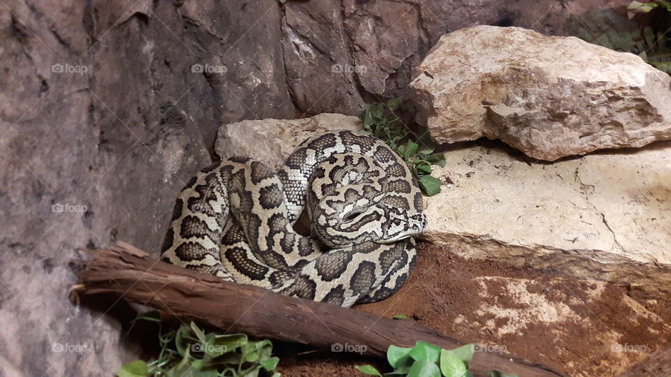 Snake at the Zoo