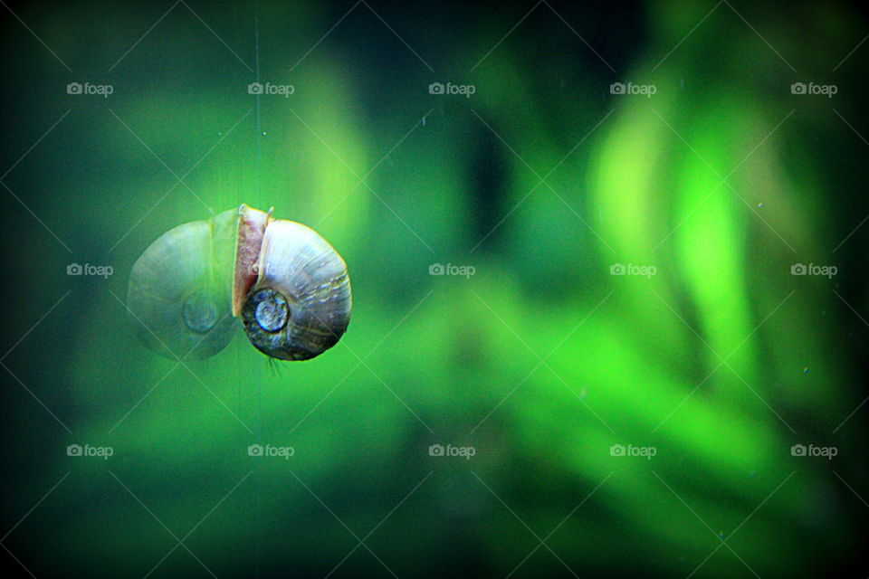 A snail on the side of a fish tank.