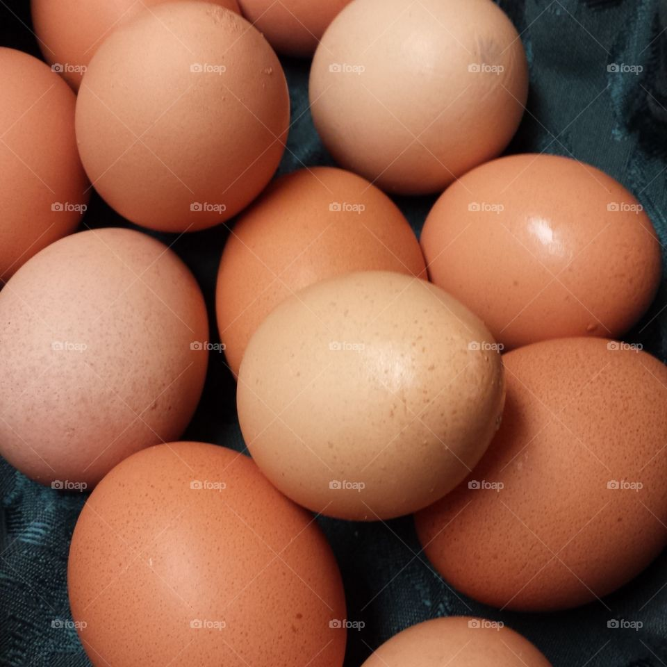 fresh eggs. fresh eggs right from the chicken