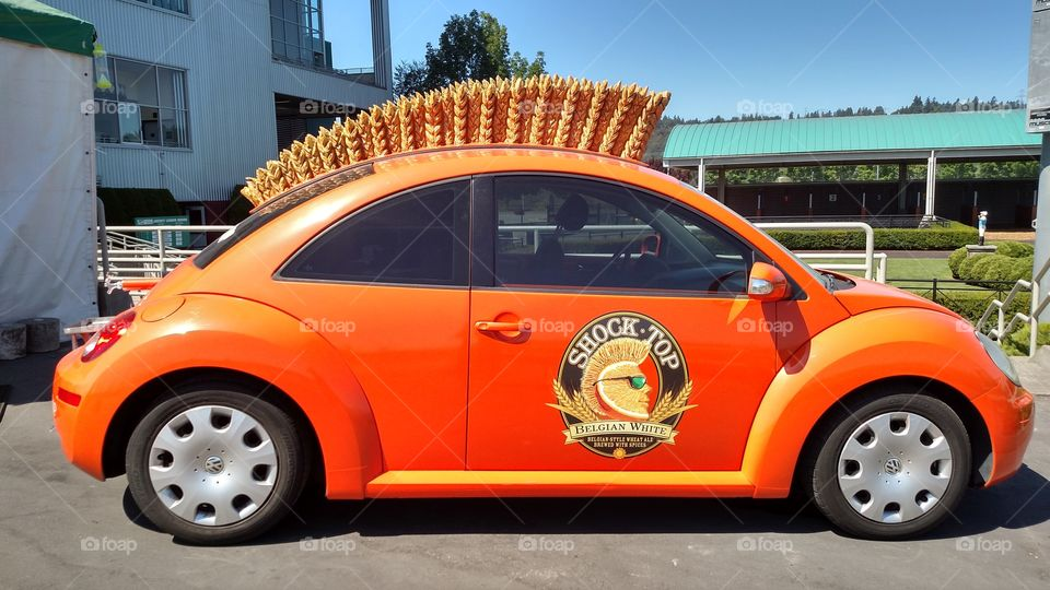 Shock Top Bug. saw this at the emeralds down at the horse races