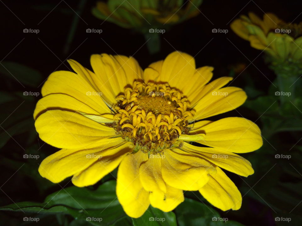 Yellow flower in the night