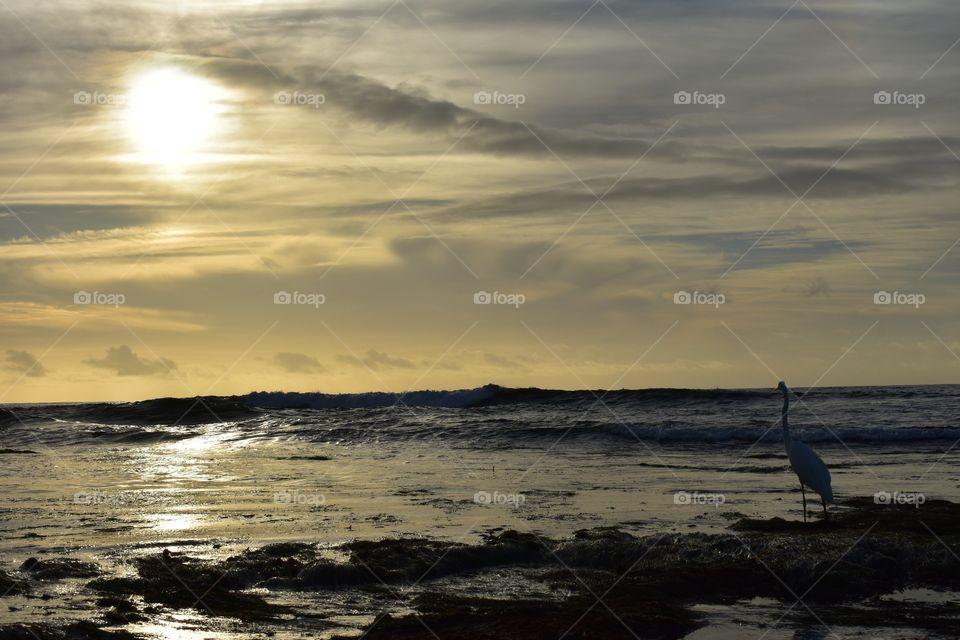 Silhouette of flamingo at seaside