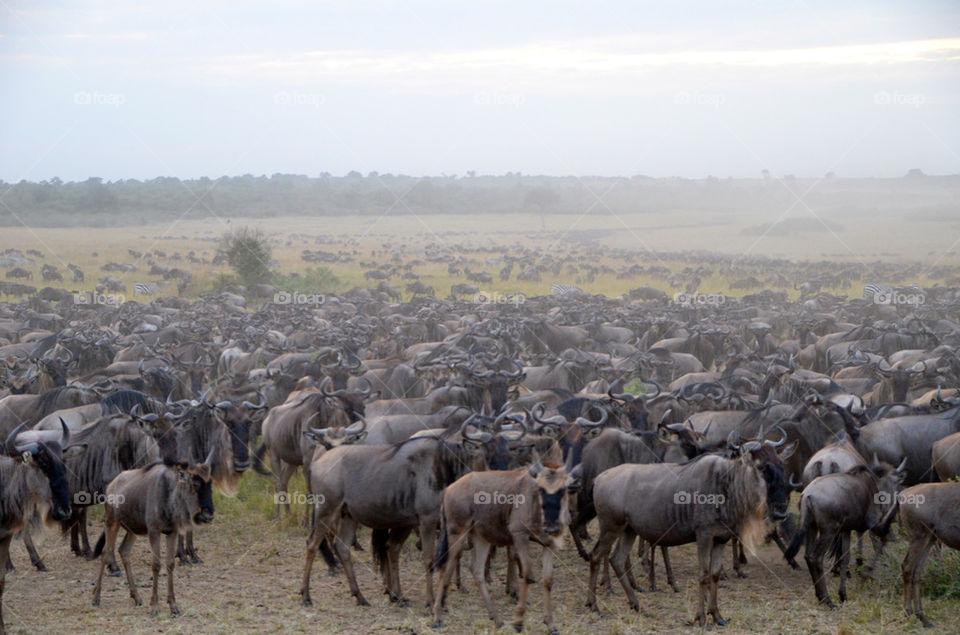 animals wild africa kenya by hunter_dude99