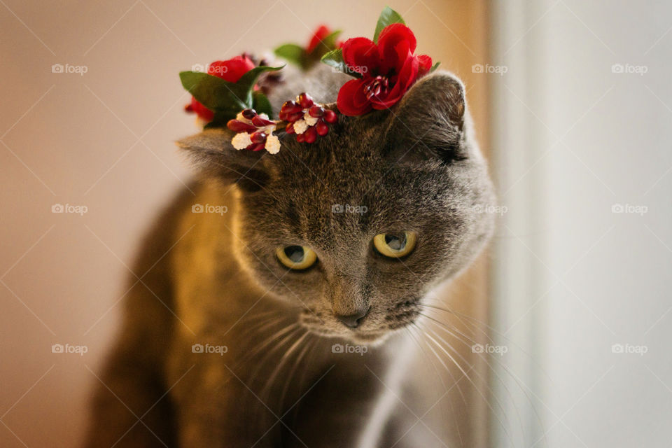 cat with a wreath of flowers