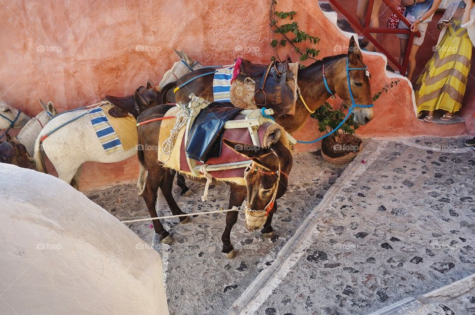 Need a lift? Donkeys in Santorini