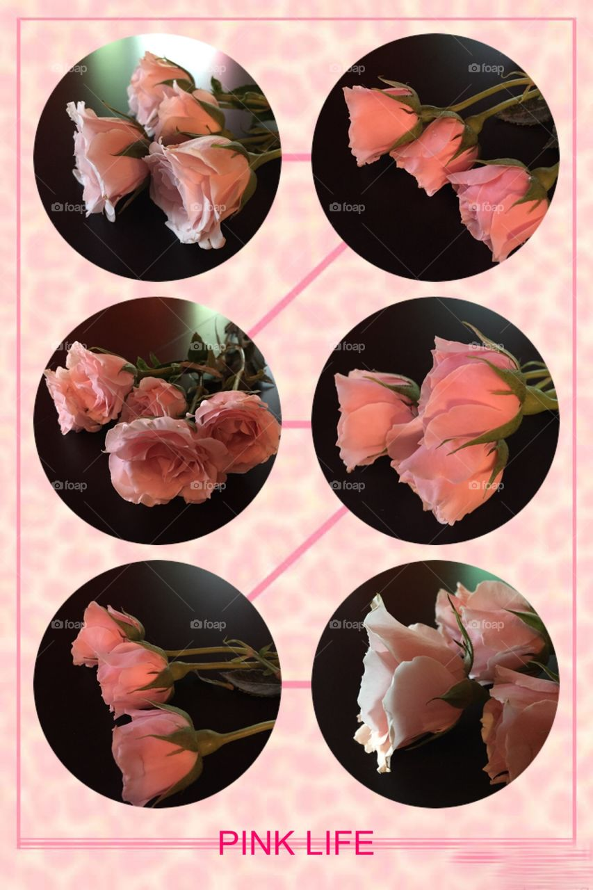 Collage of pink roses