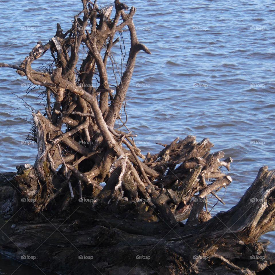 Debris floating in the mississippi river