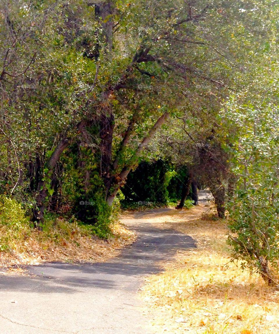 Path | muneca, oaks, trail, walk