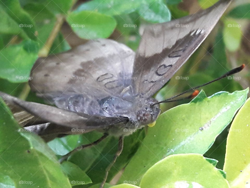 butterfly sitting on leaves
