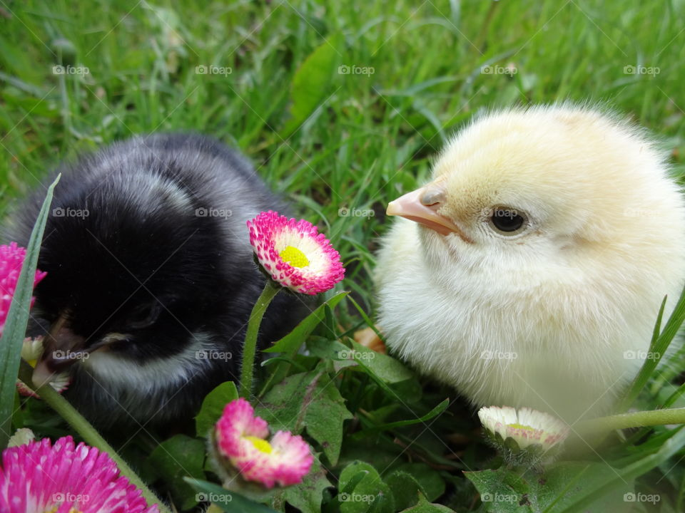 Close-up of chicks