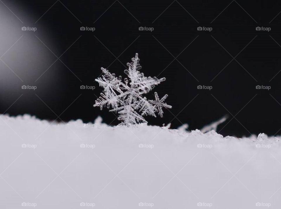 Snowflakes    snow, winter, image, ice