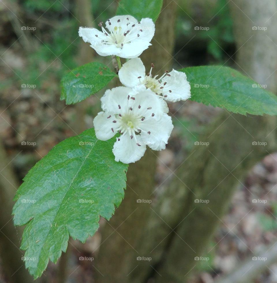 flower blume blühten Blüte