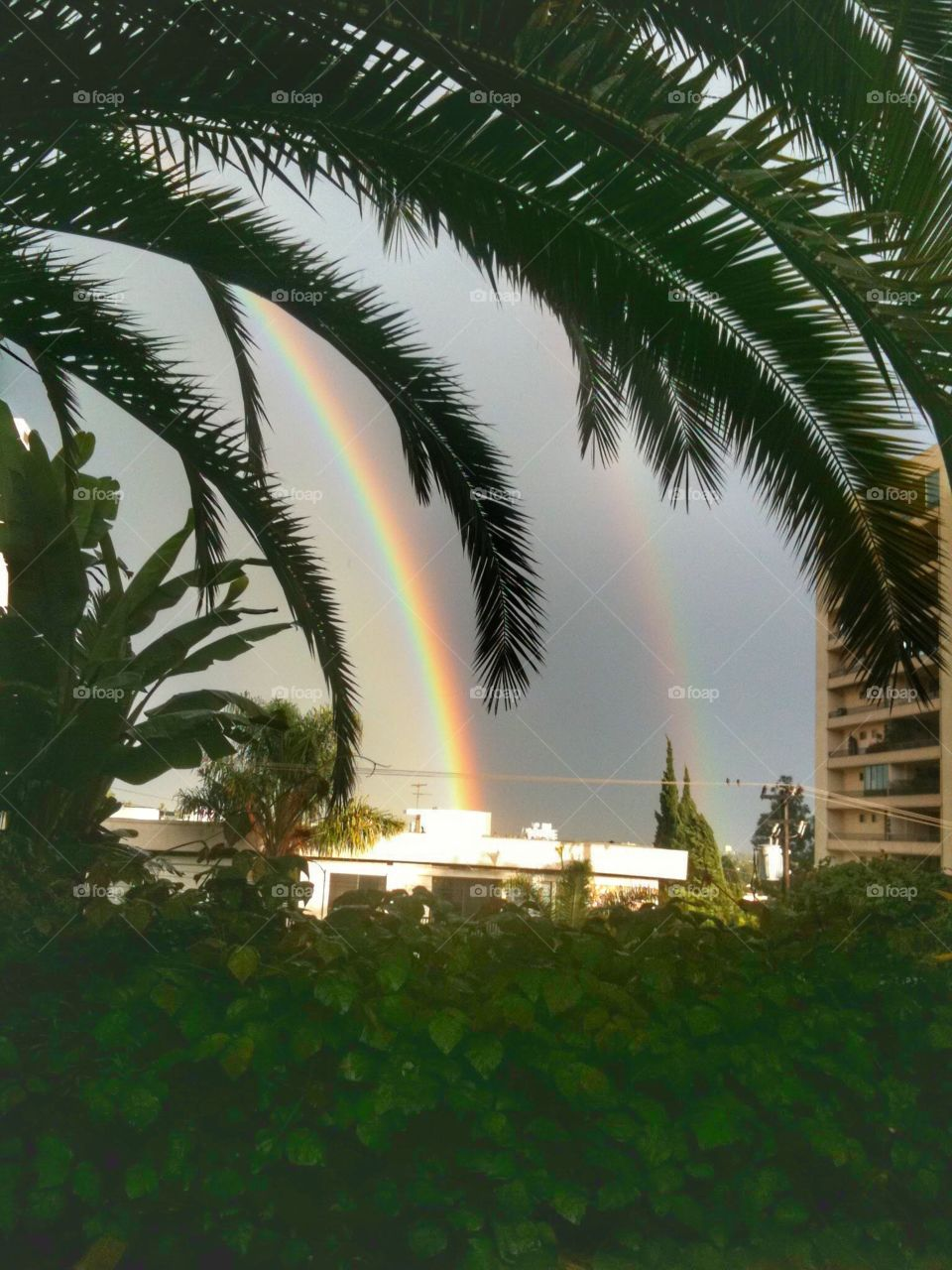 Double Rainbow Over WeHo - after a storm washes over the  city, rainbows add a dash of color to the dark sky framed by green palm trees.
