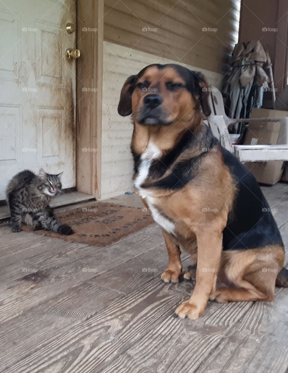 cat and dog best buds