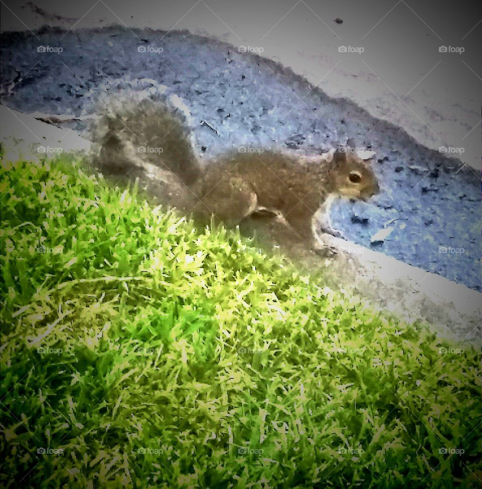 Squirrel Play curbside City Streets near Nottingham Park in Memorial District